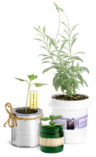 Container Gardening Supplies