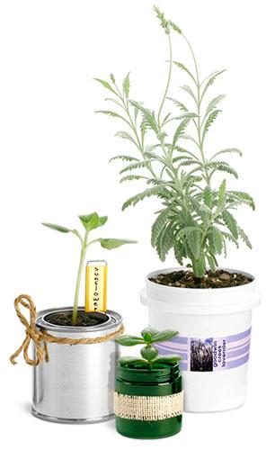 Container Gardening Supplies