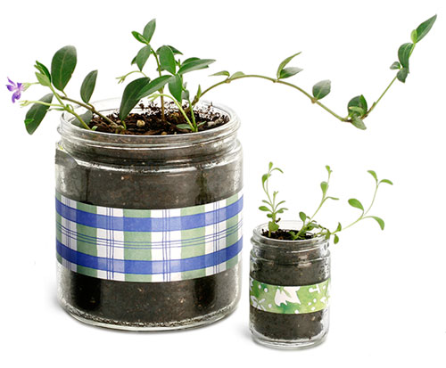 Glass Gardening Jars