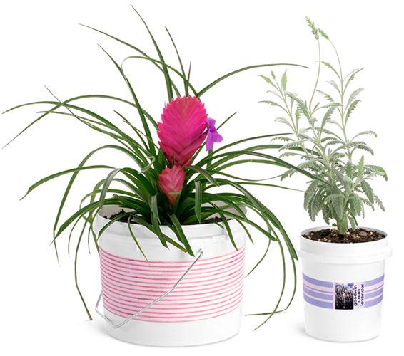 White HDPE Plastic Gardening Pails