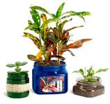 PET Plastic Gardening Jars
