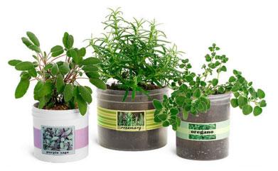 Polypro Plastic Gardening Jars
